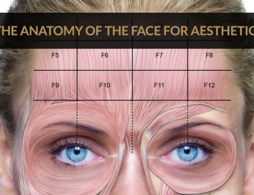The Anatomy Of The Face For Aesthetics – L1P Aesthetics